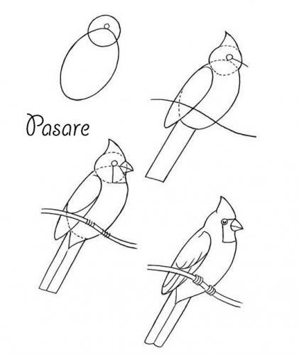 mediu_pasare