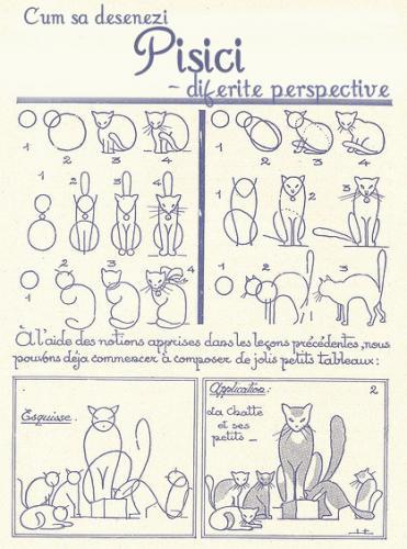 pisici2_6bye